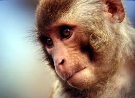 Low-intensity focused ultrasound modulates monkey visuomotor behavior.