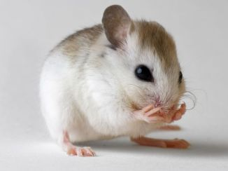 Mouse models in assessing autism